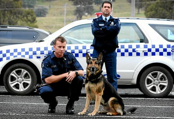 Kako se dresiraju policijski psi?